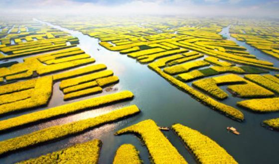 周边旅游·扬州,兴化千岛油菜花二日游