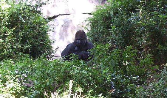 景点林地公园动物园林地公园动物园位于西雅图的