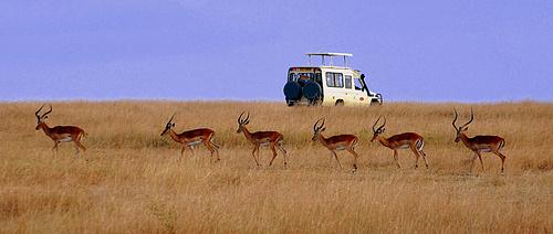 肯尼亚旅游景点推荐_肯尼亚旅游景点介绍